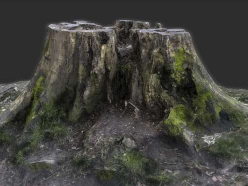 TALOS 3D Scan Store Tree Stump Model